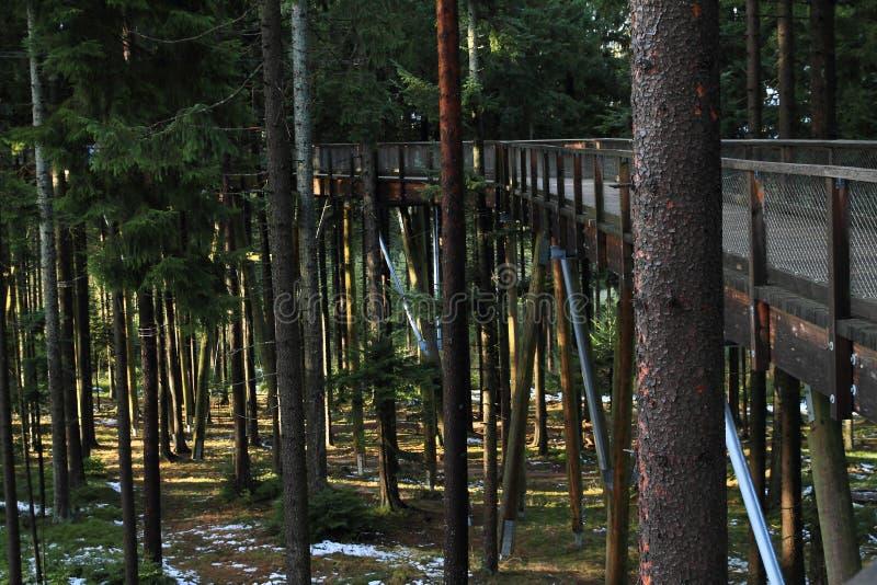 La surveillance de Lipno d'arbres de traînée photo stock