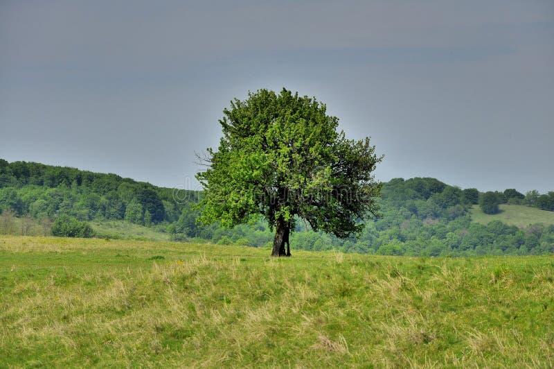 La survie - un arbre a heurté par grève surprise image stock