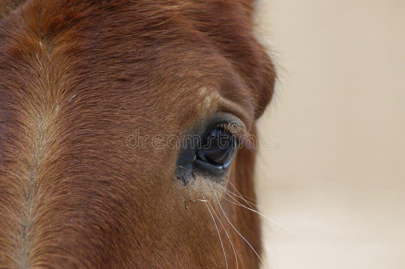La tête de cheval photos stock