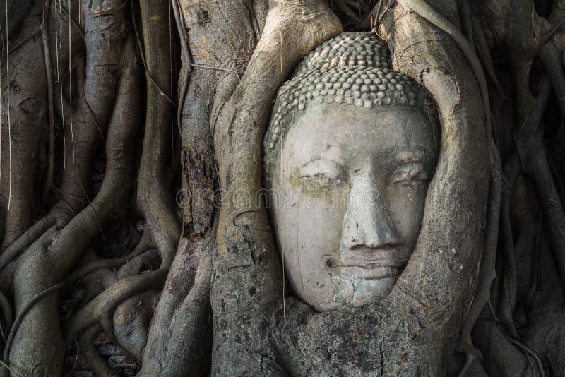 La tête de la statue de Bouddha dans l'arbre de Pho s'enracine au temp de Wat Mahathat images libres de droits