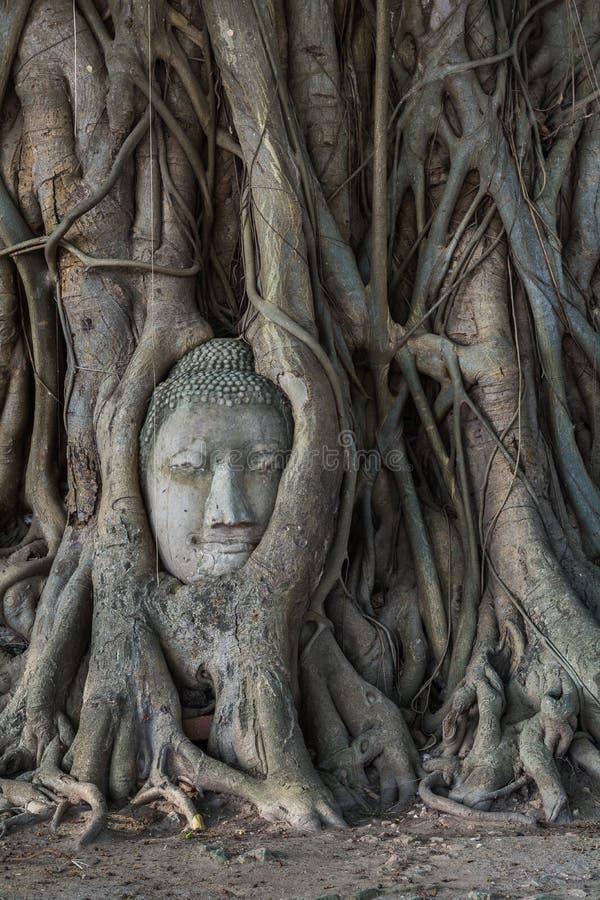 La tête de la statue de Bouddha dans l'arbre de Pho s'enracine au temp de Wat Mahathat photos stock