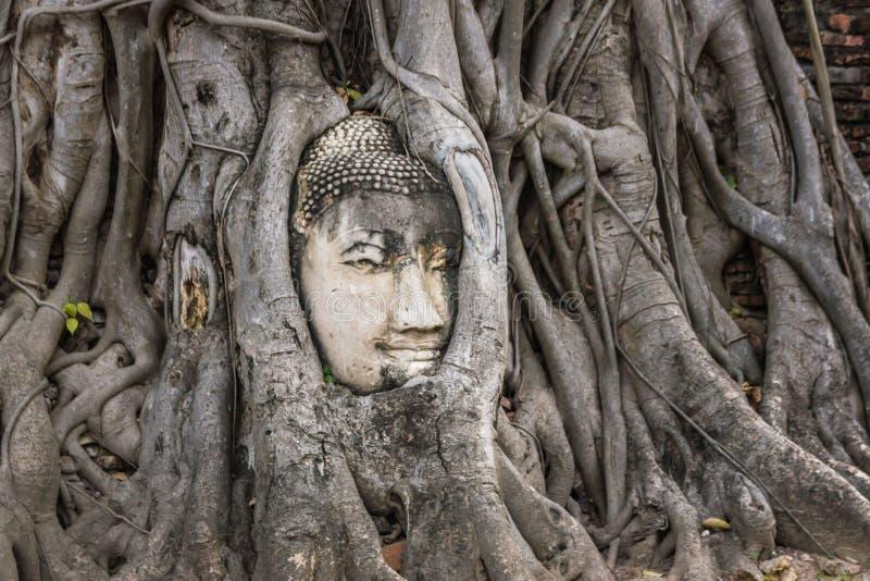 La tête de la statue de Bouddha dans l'arbre s'enracine chez Wat Mahathat, Ayutthaya, Thaïlande image stock