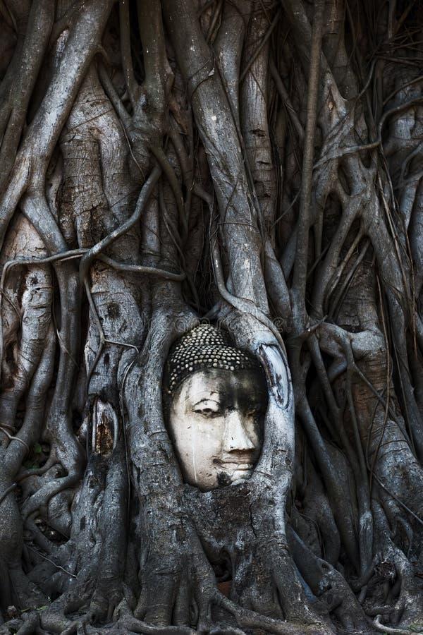 La tête de la statue de Bouddha dans l'arbre s'enracine chez Wat MahathatHead image libre de droits