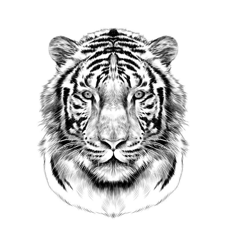 La tête des graphiques de vecteur blancs de croquis de tigre photo stock