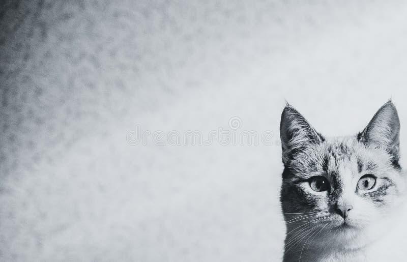 La tête du chat curieux sur le fond texturisé de mur, l'espace libre images stock