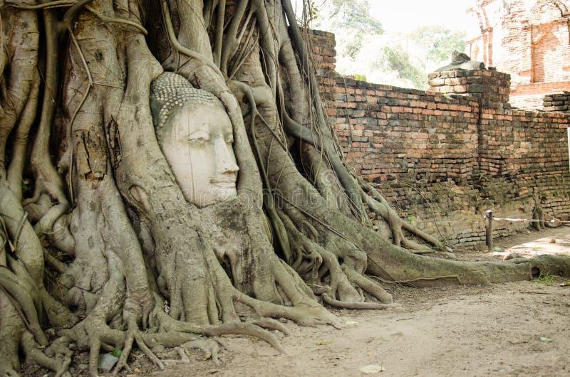 La tête en pierre de Bouddha dans l'arbre de racine photographie stock