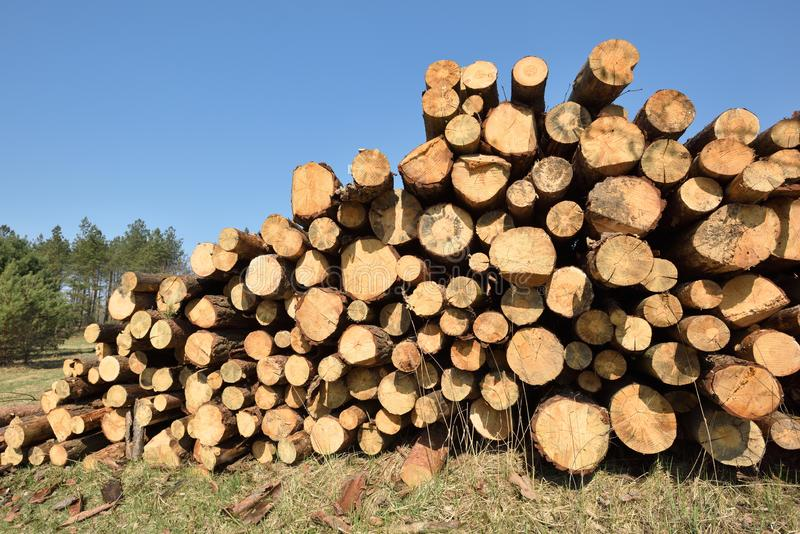 La for?t ouvrante une session de bois de construction a fra?chement coup? des rondins de pin image stock