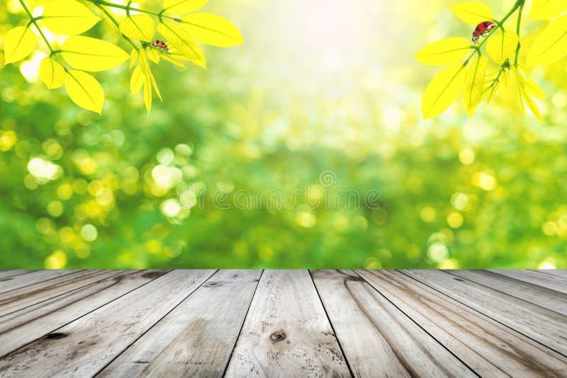 La tabla de madera con verde deja la ejecución con la mariquita fotos de archivo libres de regalías