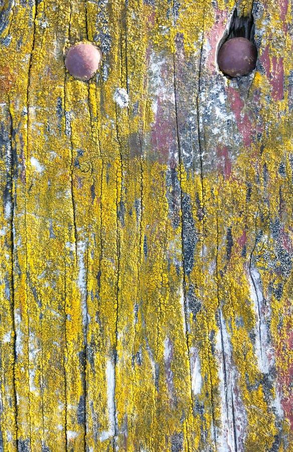 La tabla de madera envejecida cubierta de musgo natural texturizó el fondo superficial imágenes de archivo libres de regalías