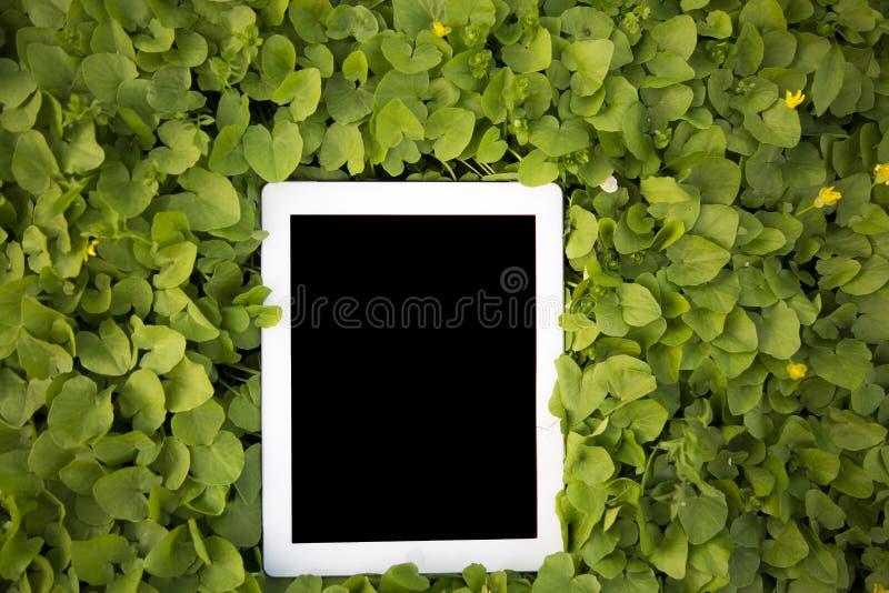 La tableta miente en el verdor primer fotografía de archivo libre de regalías