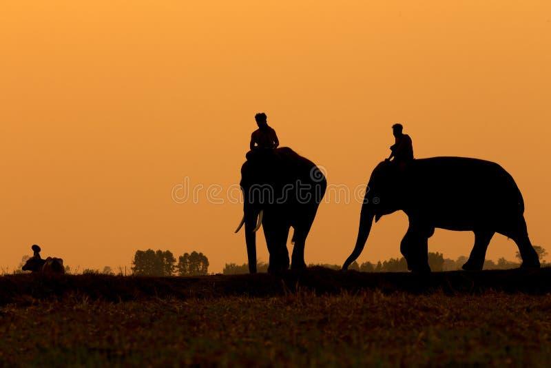 La Tailandia l'elefante ed il mahout della siluetta che stanno all'aperto fotografia stock libera da diritti