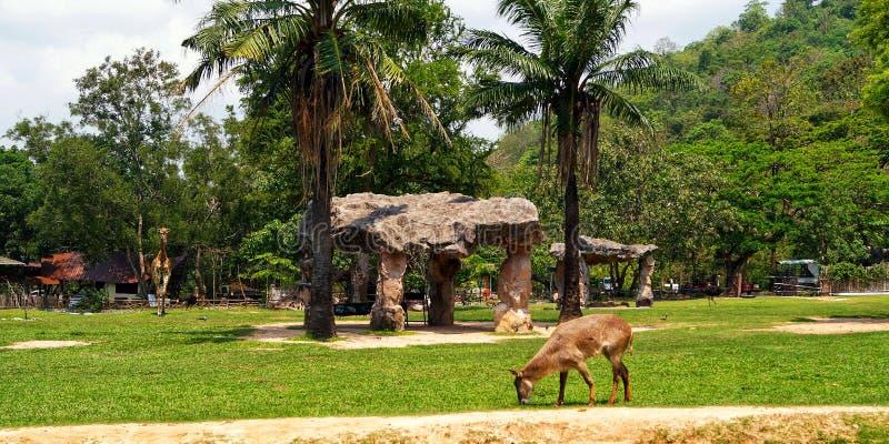 La Tailandia, Pattaya, zoo di Khao Kheo, natura, Asia, giraffa, asino, bella pietra fotografie stock libere da diritti