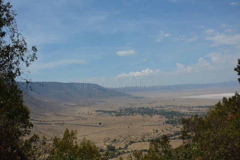 La Tanzania, Africa, fauna selvatica fotografie stock