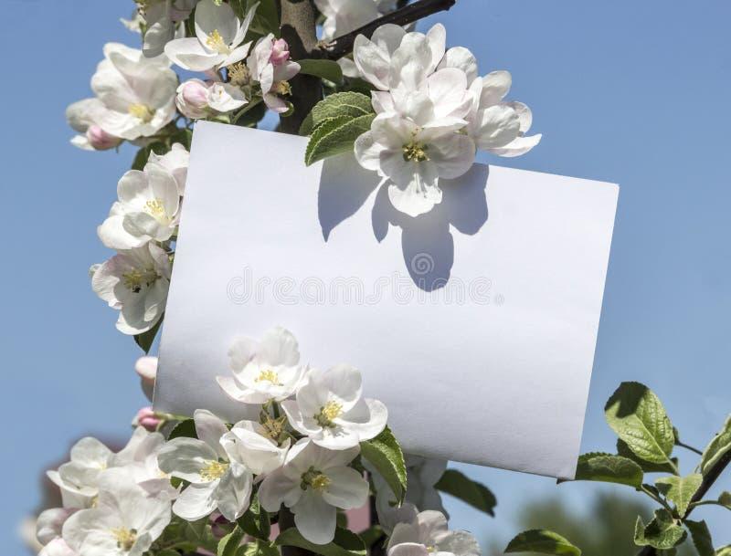 La tarjeta horizontal rectangular blanca de la hoja de papel en hojas del verde y flores del manzano ramifica imágenes de archivo libres de regalías