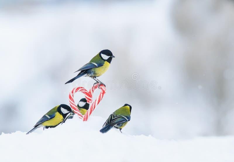 La tarjeta romántica con muchos pájaros voló a las piruletas dulces rojas en los corazones laterales en la nieve blanca en día de imagen de archivo libre de regalías