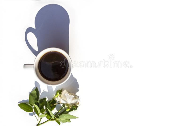fleurs de café verte