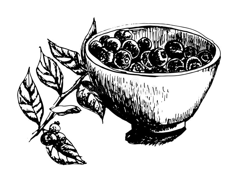 La tasse a rempli de myrtilles fraîches et de brin d'illustration tirée par la main d'encre de myrtilles illustration libre de droits