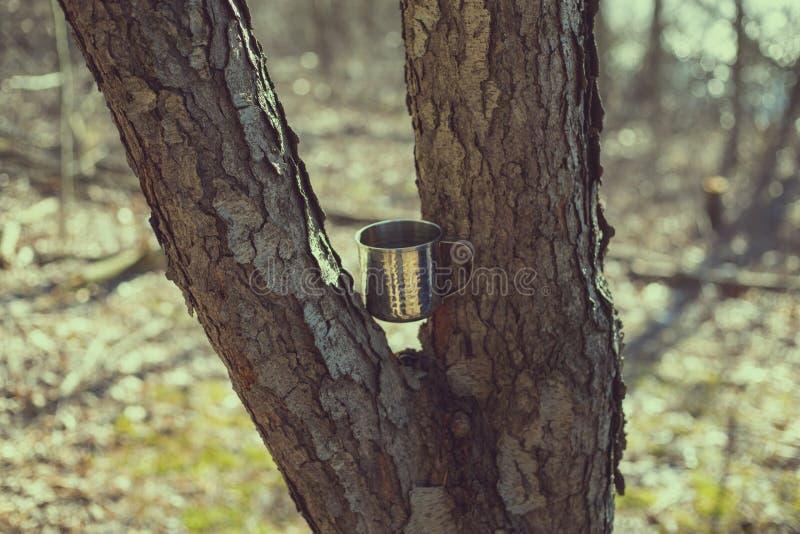 La taza acuñó entre un árbol bifurcado el día soleado fotos de archivo libres de regalías