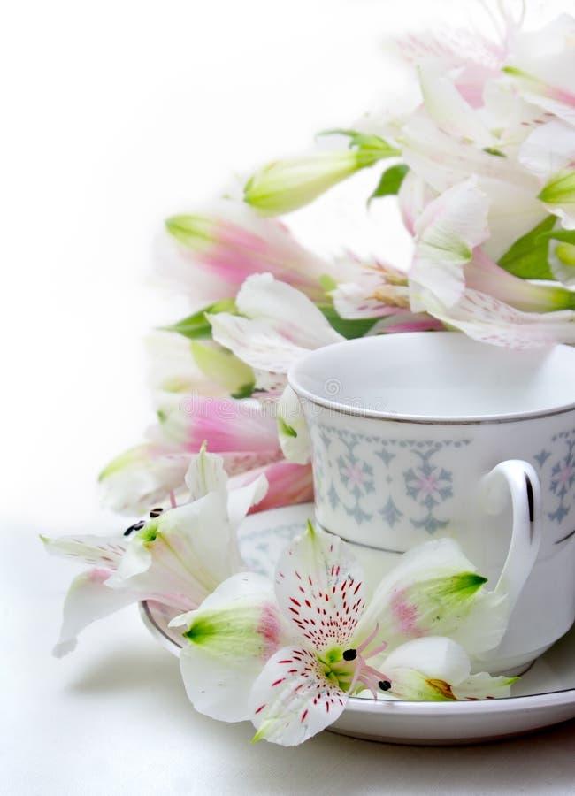 La taza de té fotos de archivo libres de regalías