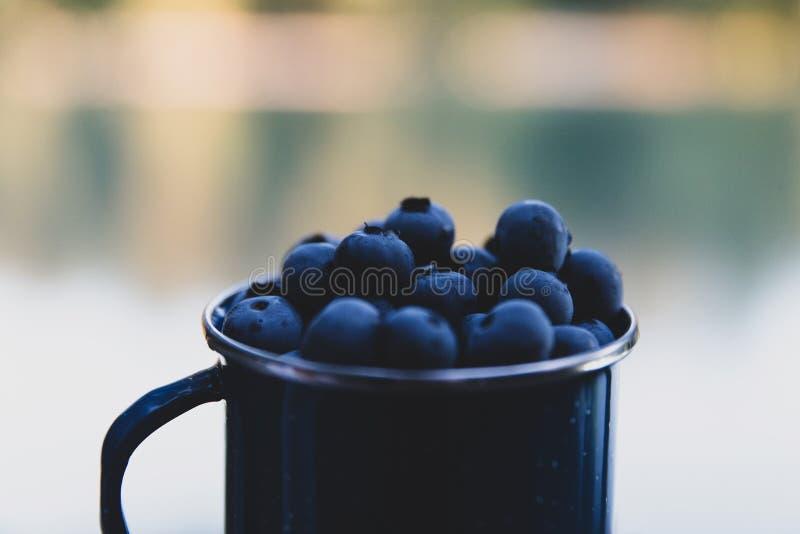 La tazza ha riempito di mirtilli fuori selezionati e maturi freschi immagini stock