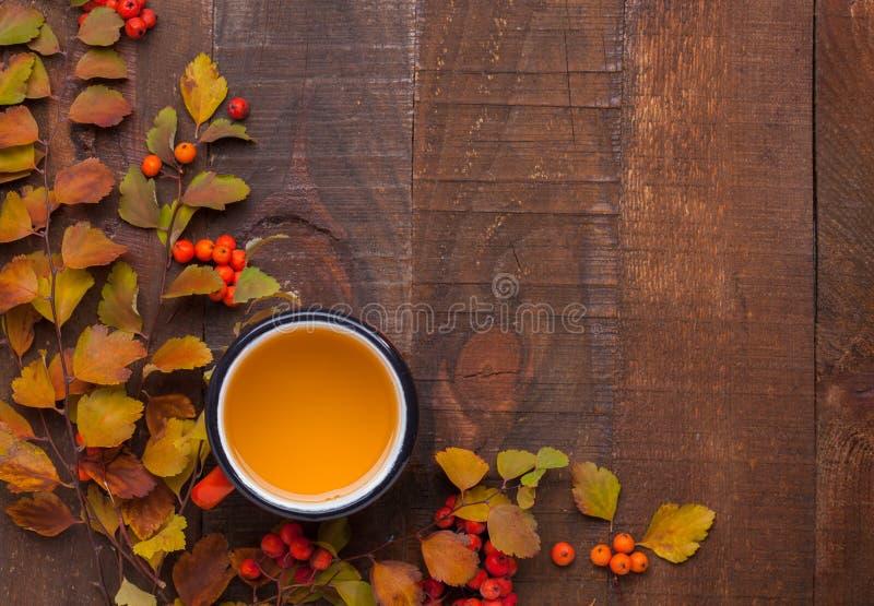 La tazza rossa smaltata di tè con i rami dello Spiraea Vanhouttei delle foglie di autunno e di piccolo rosso fruttifica sorbe sul fotografie stock