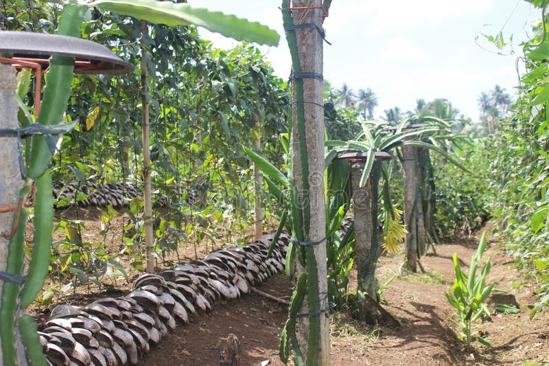 La technologie en pente de la terre agricole photos stock