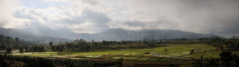 La tempesta sulle risaie nella bella e campagna lussuosa intorno al Nusa Tenggara del ruteng, isola di Flores, Indonesia fotografia stock