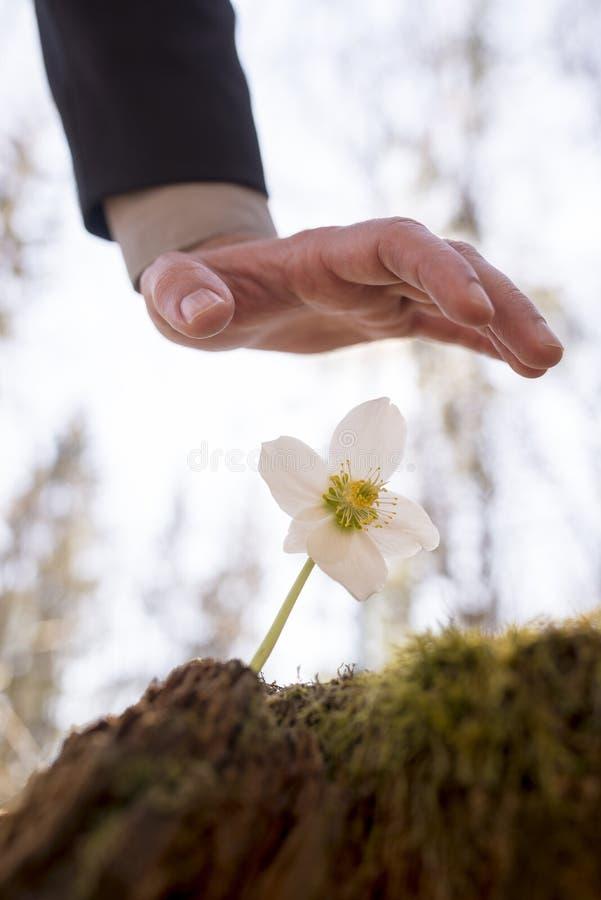 La tenencia del hombre entrega la flor fotos de archivo libres de regalías