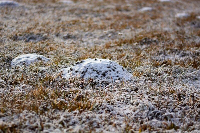 La terra ancora congelata di notte, i primi giorni della molla fotografie stock