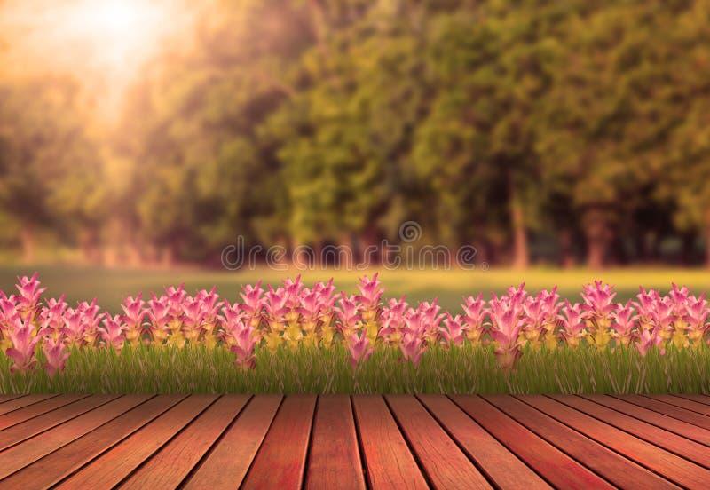 La terrasse et la tulipe en bois fleurissent avec le plan vert d'arbre photos stock