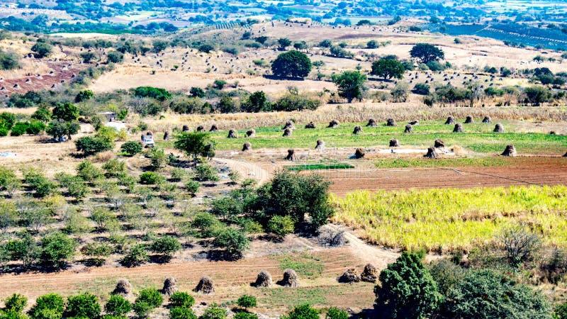 La terre agricole avec les arbres fruitiers, les piles de foin et une conduite sur un chemin de terre photos libres de droits