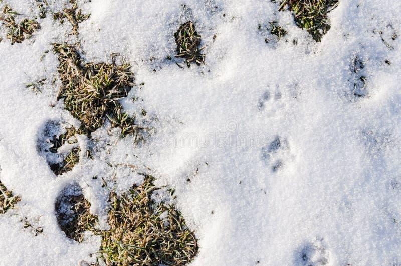 La terre couverte de neige et de voies animales image libre de droits