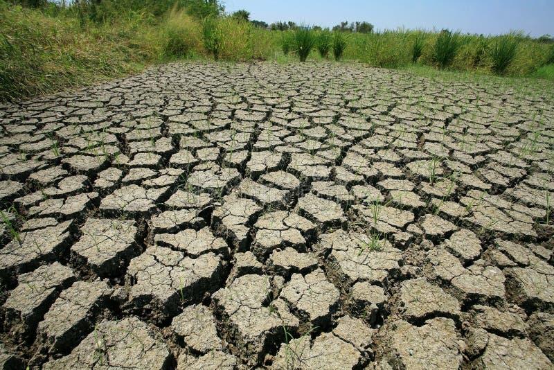 La terre criquée sèche avec l'herbe survécue image stock