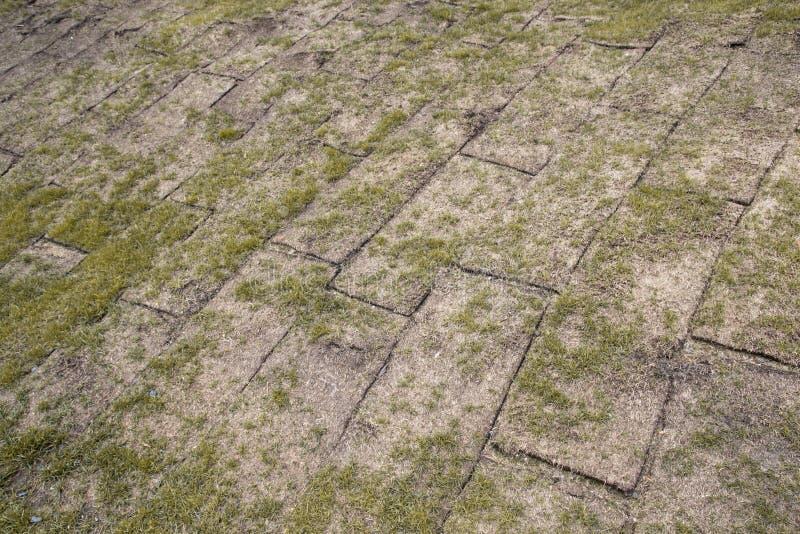 La terre dévoilée roule avec l'herbe jaune d'automne, herbe est très mauvaise photographie stock libre de droits