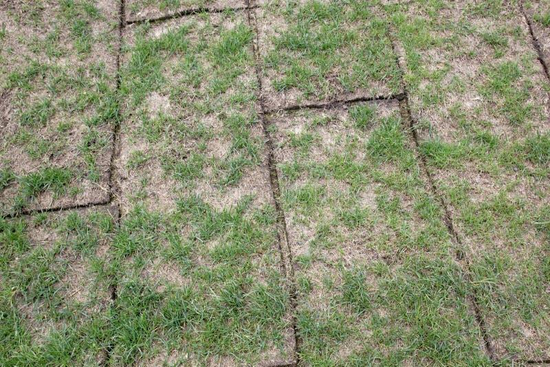 La terre dévoilée roule avec l'herbe verte, herbe est qualité très mauvaise, images stock