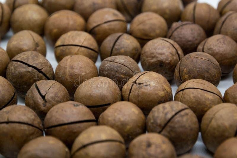 La terre du noisetier d'Australie avec la coquille, fond sain de fruit de macadamia, noisetier d'Australie organique avec la coqu photo libre de droits