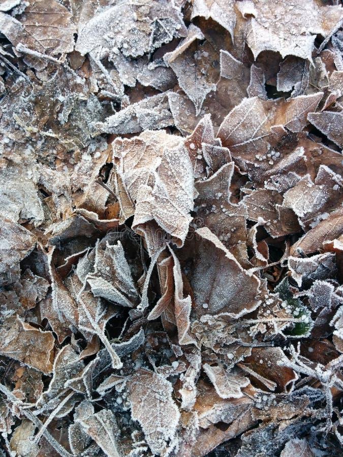 La terre dure de feuilles de gel froid gelé d'hiver photo stock