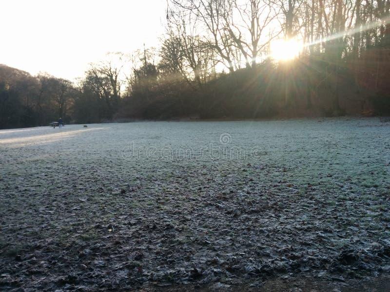 La terre dure de feuilles de gel froid gelé d'hiver photos libres de droits