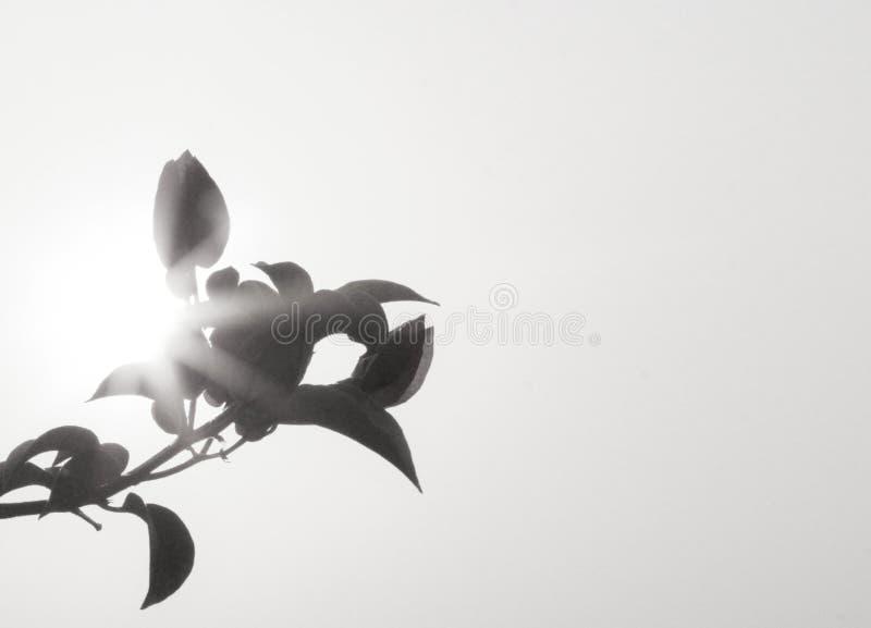La terre noire noire et blanche de fleur à la ville de la Thaïlande image stock