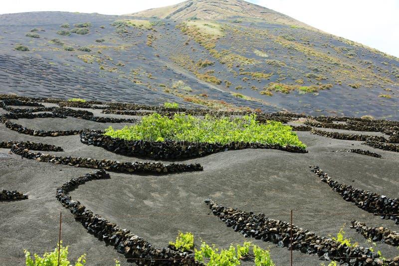 La terre noire volcanique avec des vignobles en La Geria, Lanzarote, Îles Canaries images libres de droits
