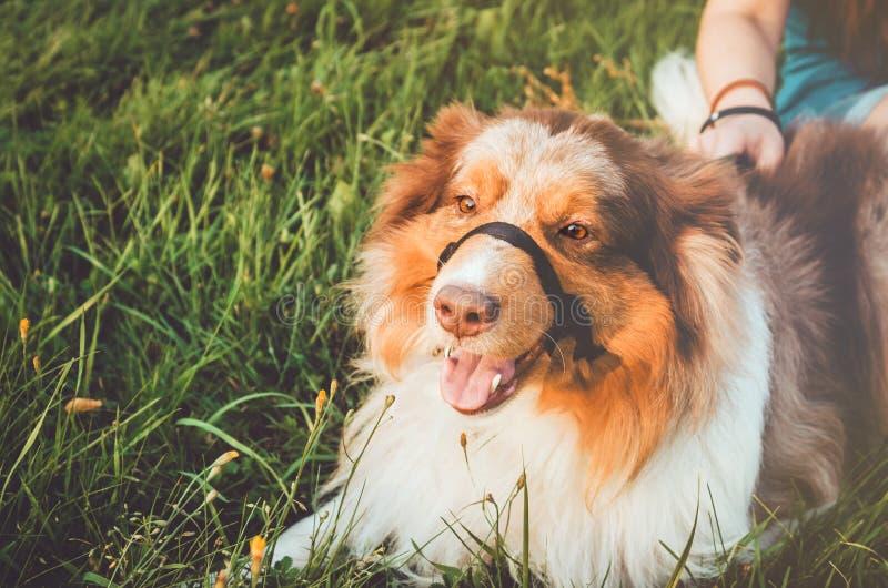 La testarossa sveglia pets il rilassamento sull'erba verde dopo gioco lungo, ha un divertimento all'aperto Giovane ragazza felice fotografia stock libera da diritti