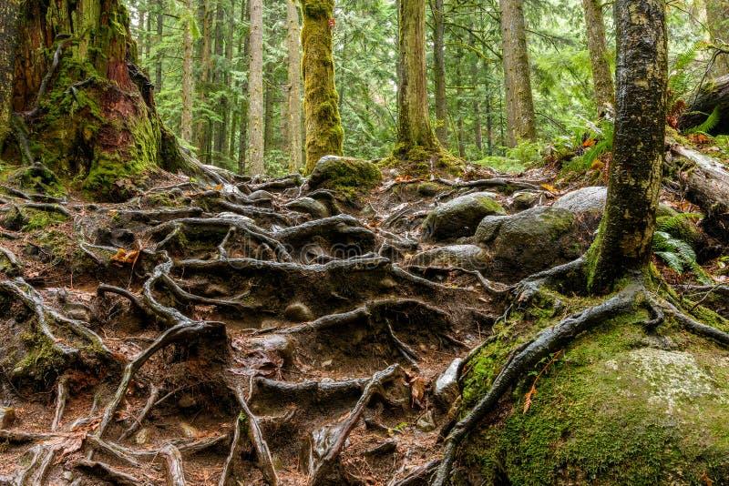 La textura abstracta del árbol arraiga en la selva tropical de Lynn Can imagenes de archivo