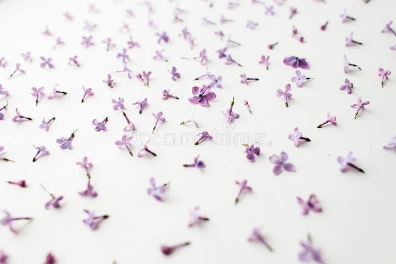 La textura de las flores de la lila en un fondo blanco imágenes de archivo libres de regalías