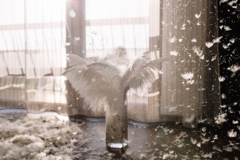 La textura de las plumas de un cisne foto de archivo libre de regalías