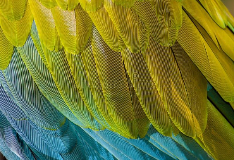 La textura de las plumas de un loro grande foto de archivo