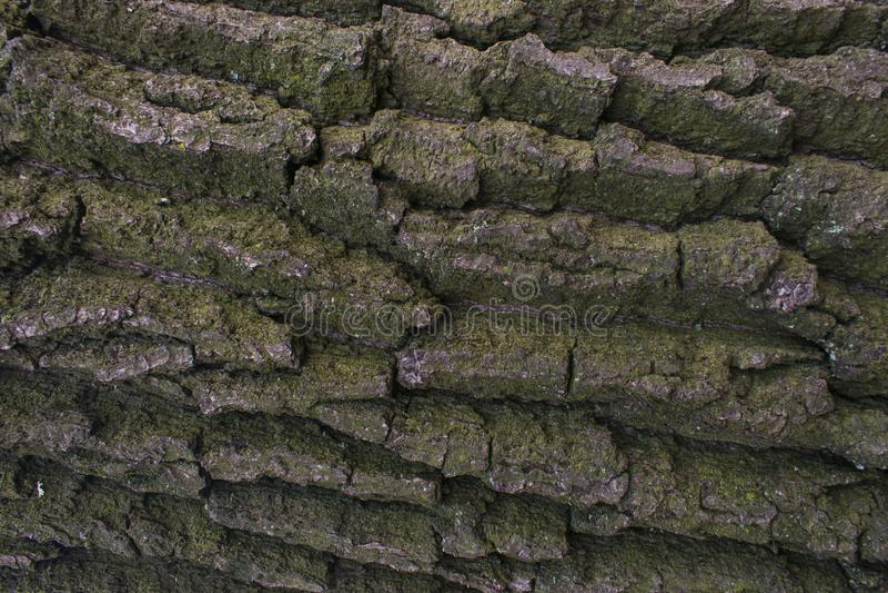 La textura del árbol es marrón fotografía de archivo libre de regalías