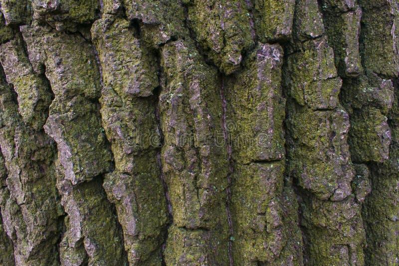 La textura del árbol es marrón fotos de archivo