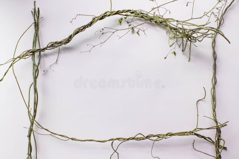 La textura del modelo con las hojas secas verdes salta en el fondo blanco Endecha plana, concepto m?nimo de la visi?n superior imagen de archivo libre de regalías