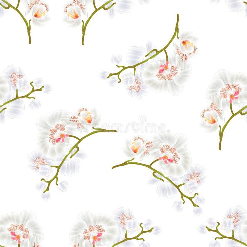 La textura inconsútil ramifica tronco verde de las plantas tropicales de las flores blancas del Phalaenopsis de las orquídeas y f ilustración del vector