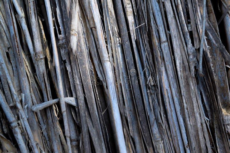 La textura natural formó por varias ramitas, gris brillante fotografía de archivo